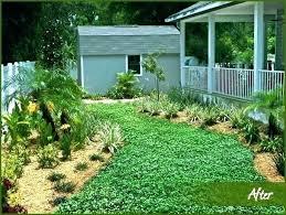 alternatives to grass in backyard alternatives to grass in backyard lawn alternatives grass