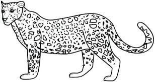 snow tiger coloring page coloring pages for adults only snow leopard tiger on a tree branch