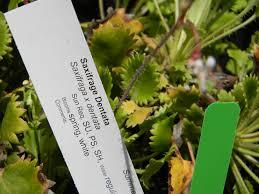 native plant salvage 2017 master gardener plant sale thurston county washington