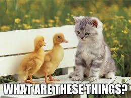 Funny Kitten Memes - top ten cute cute kitten memes kittens cute wallpapers