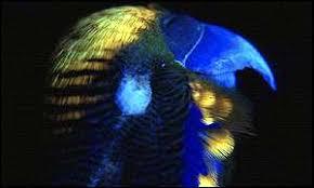 uv light for birds parrot forum view topic uvb lighting