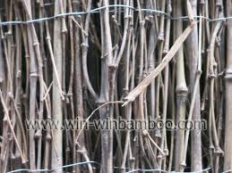bamboo garden farming products