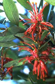 plant names u2013 a basic introduction avh
