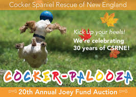 cocker spaniel rescue of new england inc u2014 the right dog in the