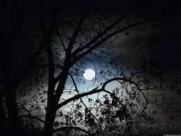 more trees beautifully moon