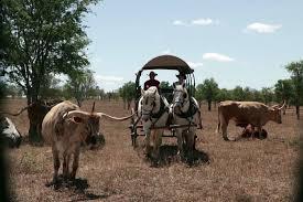 longhorn bring taste of texas life to north queensland