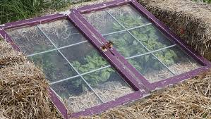 this diy cold frame keeps frost at bay