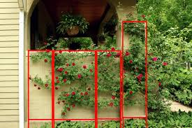 popular climbing rose trellis design u2013 outdoor decorations