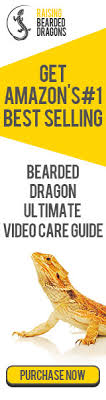 bearded dragon lighting guide bearded dragon lighting why it s vital for your dragon s health