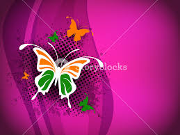 indian flag butterfly on indian flag flower isolated on grey