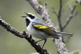 North Carolina birds images Saving north carolina 39 s climate threatened birds audubon north jpg
