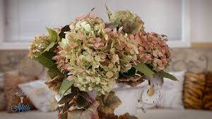dried hydrangeas how to hydrangeas with glycerin