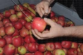 temperature chambre sonde de température pour suivi des pommes en chambre froide