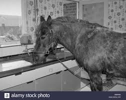 Kitchen Sink Drink Sam The Pet Pony A Drink Of Water In The Kitchen Sink Of