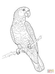 imperial amazon parrot coloring page free printable coloring pages