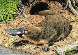 imagenes animales australia barrameda com ar el peligroso futuro al que se enfrentan los