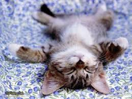 Sleepy Kitty Meme - cats images sleepy kitty hd wallpaper and background photos 153784