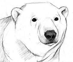 25 polar bear drawing ideas polar bear