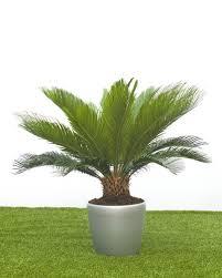 benefits of houseplants health benefits of house plants house of plants