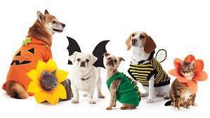 pet costumes pet costumes martha stewart