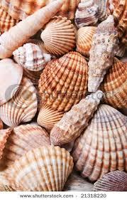 where to buy seashells 207 best sea shells by the sea shore images on