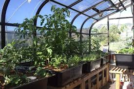 aquaponic gardening growing fish and vegetables together