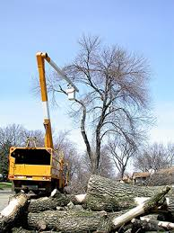 will we our ash goodbye forests