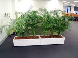 unique indoor planters modern indoor planters ideas home decor inspirations