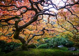 colorado u s japanese gardens all things relative the portland japanese garden pdx or