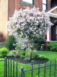 small ornamental trees small ornamental trees zone 6b beyondeight co