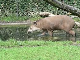 native plants in the amazon rainforest rain forest mammals
