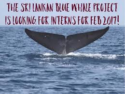 Whale The Unorthodox Whale Dedicated To Conducting Research And