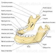Human Anatomy Torso Diagram Bones Human Anatomy Organs