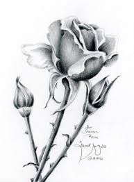 how to draw flowers step by step with pencil google search