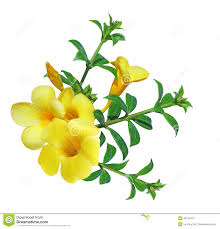 yellow bell flower clipart clipartxtras