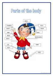 121 free esl parts of the body worksheets