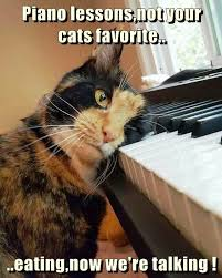 Cat Playing Piano Meme - piano lessons not your cats favorite lolcats lol cat memes