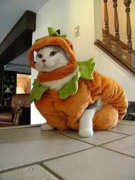 25 terrifyingly cute halloween costumes pets