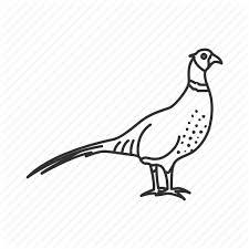 state bird of south dakota birds ring necked pheasant south dakota state state birds