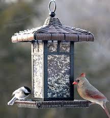 Backyard Wild Birds Unique Decorative Bird Feeders For Your Lucky Backyard Wild Birds