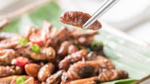 insectes cuisine cuisine des insectes migros ève