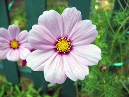 free michigan flowers 2 stock photo freeimages com