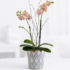 orchid plant orchid plants plants