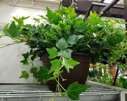 low light houseplants 10 best low light houseplants