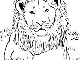 coloring page lion coloring page of lion the best lion coloring pages ideas on