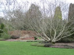 willow garden design garden design blog