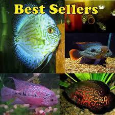 aquarium fish for sale tropical fish freshwater fish and