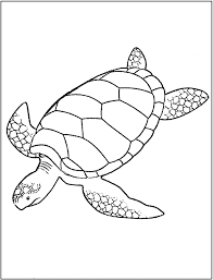 coloring page turtle simple sea turtle drawing sea turtle coloring page free printable