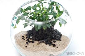 make an indoor terrarium for kids