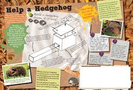 helping hedgehogs around the uk the wildlife trusts